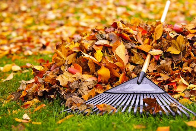 Top 9 Blogs to Help You Manage Fall Yard Work